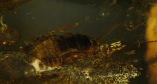 """Exhibitions from the series """"Microworld of Amber"""""""