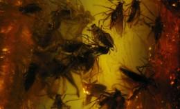 Выставка «Воздушный планктон вянтаре»